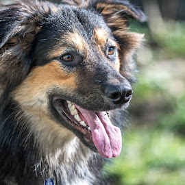 Dog 5 by Darren Sutherland - Animals - Dogs Portraits ( jango, dog )