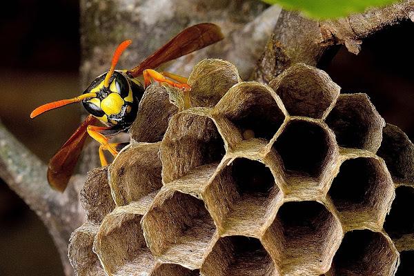 la guardia del nido di teolla