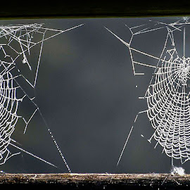by Bojan Berce - Nature Up Close Webs (  )