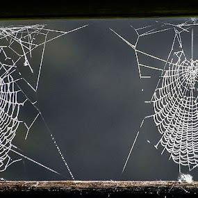 by Bojan Berce - Nature Up Close Webs (  )