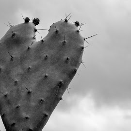 heart by Mike Gonzales - Nature Up Close Other plants