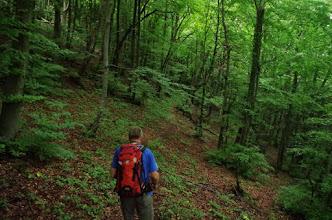 Photo: Lijepa šuma