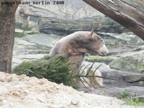 Photo: Das neue Ziel ist die Schlafkuhle mit dem Tannenbaum ;-)