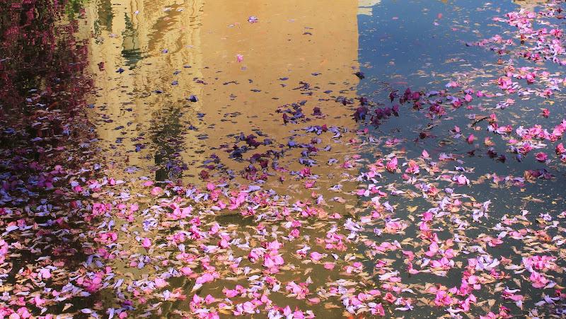 Petali sull'acqua di ManuelGoWest
