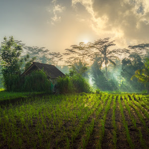 Morning Rays at Susut Rice Terrace copy.jpg