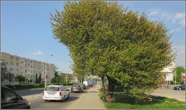 Photo: Vișin Turcesc (Prunus Mahaleb), din Turda, Calea Victoriei - 2018.04.23
