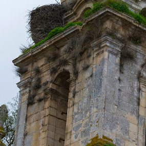 Mosteiro de Seiça by Edu Marques - Buildings & Architecture Decaying & Abandoned ( old house, old, tower, ancient, trees, landscape )