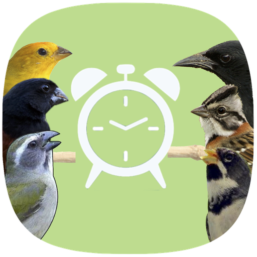 Despertador Birds Brazil