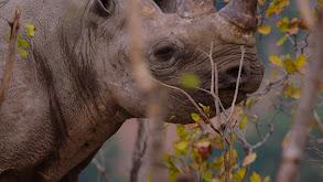 Mission Black Rhino thumbnail
