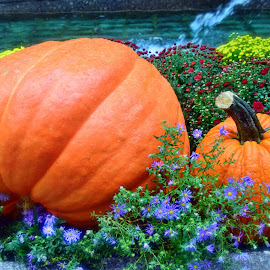 by Andrew Piekut - Public Holidays Halloween (  )