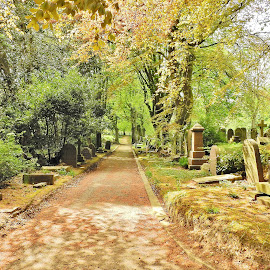 Quiet walkway by Eloise Rawling - Novices Only Landscapes ( scarborough, footpath, cemetery,  )