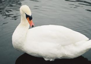 Photo: ...and white