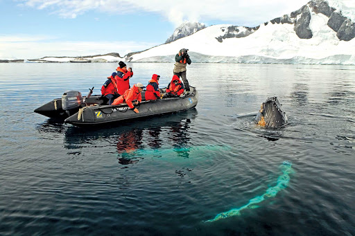 Travelers on a Lindblad Expeditions tour get a closeup look at a humpback whale near the Antarctic Peninsula.