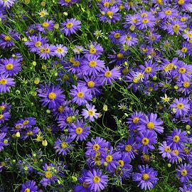 DEB#7 by Debanjan Goswami - Flowers Flower Gardens ( 05-01-2017 )