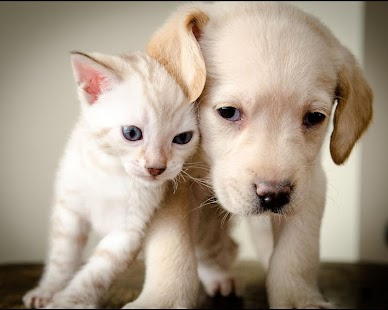 Puppy and Kitten Wallpapers - náhled