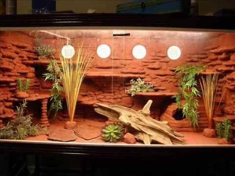 Bearded Dragon Habitat Landscape and Furniture