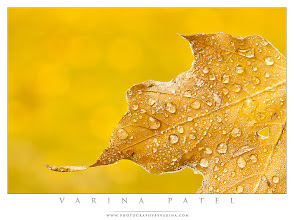 Photo: Aperture and Composition  #PhotographyTips  I wanted a specific effect when I took this shot... here's what I was thinking.  Yesterday morning, I went out and took some photos of the frost and frozen droplets on autumn leaves in my back yard. I used a small clamp to hold the leaf off the ground in front of my camera. I wanted even lighting on the leaf, and a clean background of autumn color behind. I chose to shoot at f16 to get some extra depth of field on the leaf, and to keep some of the subtle bokeh on the leaves behind. A wider aperture would have resulted in the loss of the bokeh effect.  As usual, I wanted an extremely simple composition - no distractions. But I also wanted to make sure the image showed the character of the leaf. I looked for a leaf with a nice shape, and a bit of uniqueness. The little twist at the lower left stood out to me - subtle, but beautiful - and I loved the small hole on the right as well... especially since it is ringed with frost.  Autumn in Ohio is incredibly beautiful! We've had frost on the ground for the last three or four mornings - and it is absolutely gorgeous out there when the sun creeps over the horizon!