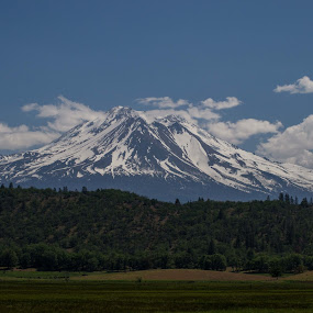 Shasta by Scott Morgan - Landscapes Mountains & Hills ( hills, shasta, mountain, tree, green, snow, mt. shasta, white, trees, forest, snow covered,  )