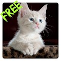 Free Cats HD Live Wallpaper icon