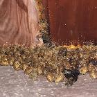 Epsilon Resin Wasp