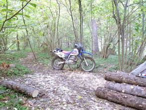 Photo: ААА! Мотоцикл в лесу!