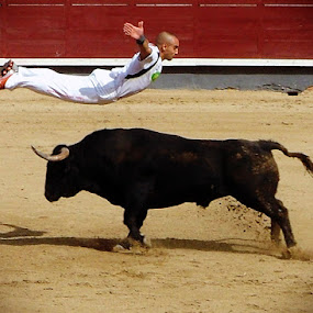 BullMatrix by Valentyn Kolesnyk - News & Events World Events ( rekorte, boldness, courage, bull, agility )