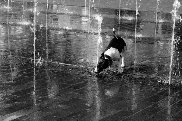 sete di alice_pasquini