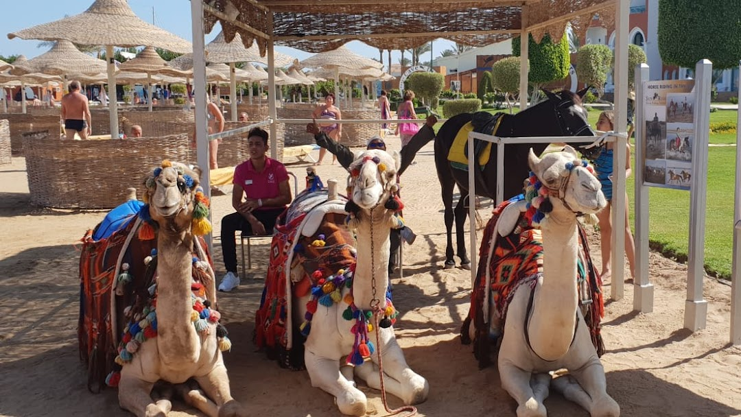 Sunrise Camels & Horses, Hurghada - by the Red Sea in the