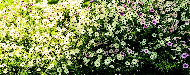 Springflowers. di M47OH