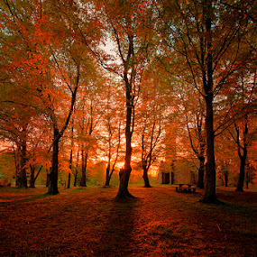 Setting at Hardwick by Ian Taylor - Landscapes Prairies, Meadows & Fields ( colour, uk, hardwick park, tree, autumnal, sunset, sedgefield, trees, long, shadows, sun )