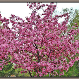 Glorious Spring Colors by Yvonne Collins - Nature Up Close Trees & Bushes