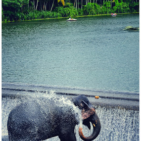 Elephant by Dipin Dev P - Animals Other Mammals ( elephants, mammals, animals, waterfalls, elephant )