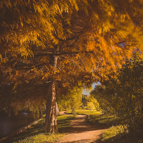 From Dusk 'Till Dawn by Florian Teodorescu - City,  Street & Park  City Parks ( orange, yellow, leaf, leaves, bucharest, tree, autumn, fall, d7000, trees, night, nikon, garden )