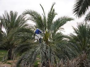 Photo: pylenie palm
