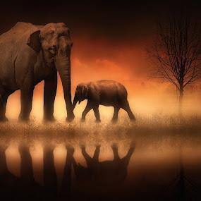 The Elephants at Dusk by Jennifer Woodward - Digital Art Places ( elephants, animals, wildlife )