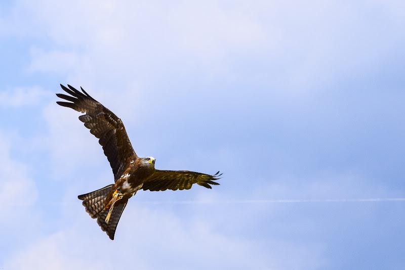 Liberi di volare  di DiegoCattel