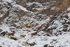 Travel to Tajikistan Pamir Highway and Wakhan Corridor // Ibex Goats