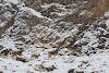 Travel to Tajikistan Pamir Highway and Wakhan Corridor // Ibex Goats
