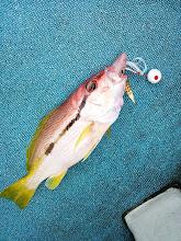Photo: ・・・残念。真鯛じゃなかった。