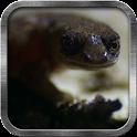 Gecko Live Wallpaper icon