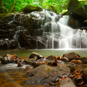 Rain Forest - Water Fall by Fredzex Foo - Landscapes Waterscapes ( stream, nature, waterscape, jungle, falls, rain forest, forest, rock, water fall, landscape, river )