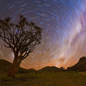 Quiver Tree Star Trail. by Hennie Cilliers - Landscapes Starscapes