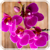 Beautiful Orchid LiveWallpaper