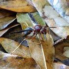 Metric Paper Wasp