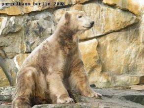 Photo: Marmorbaerchen Knut :-)