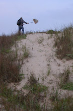 Photo: Atop the dunes at Boca Chica.