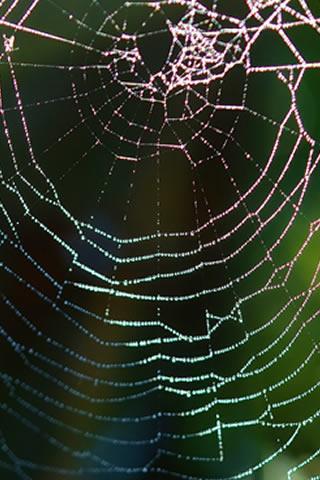 Spidermen 2015 Spider Men New