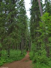 Photo: 27 км Линдуловская роща