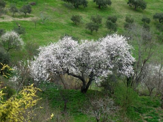 Primavera di Polly89