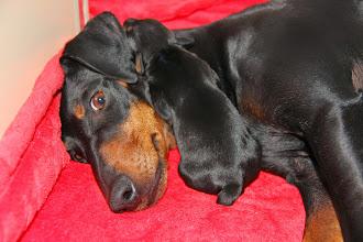 Photo: Dag 3, Meagan met een puppy reu